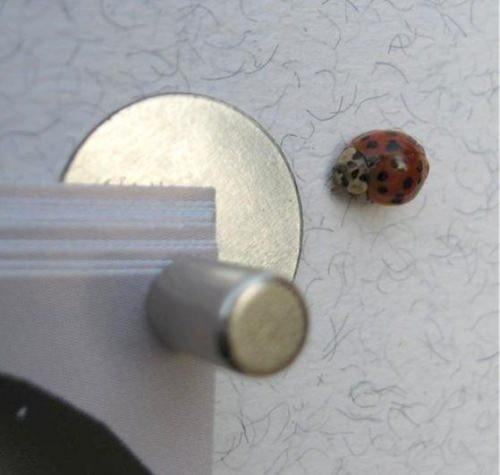 FLUX-Mini Pinnwand, Edelstahl, selbstklebend 1,5 cm